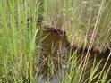 Maličký záliv rybníka Velká Houkvice.