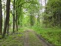 Lesní cesta mezi Velkou a Prostřední Houkvicí.