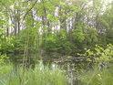 Rybník Prostřední Houkvice od severovýchodu.