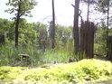 Na severním břehu rybníka Prostřední Houkvice.