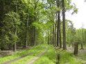 Cesta na sever od rybníka Prostřední Houkvice.