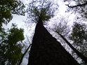 Les nabízí bezpočet nádherných a vždy trochu jiných pohledů do korun stromů.