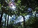 Slunce po dešti mezi bukovým listím působí tak nadějně.