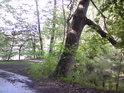 Kam se se svou šikmostí hrabe šikmá věž v Pise proti dubu na hrázi rybníka Velká Houkvice, který na jedné straně zpevňuje a na druhé je tažen ze srázu do vody.