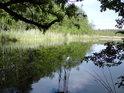 Rybník Velká Houkvice pod dubovou větévkou.