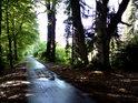 Asfaltová lesní cesta mezi městy Týniště nad Orlicí a Třebechovice pod Orebem vede svou částí po jihozápadní hranici chráněného území.