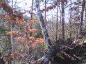 I v zimě tu můžeme spatřit více barev, třeba od listí zimního dubu, břízy, mechu a jehličí.