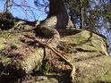 Smrkový kořen si našel cestu k životu mezi skalami.