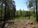 Lesní cesta od polské hranice přes údolí v Hranečníku.