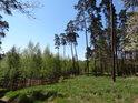Smíšené lesy jsou nejodolnější a dlužno dodat, že i nejpřirozenější.