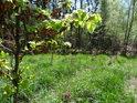 Mladé bukové listí se má k životu, ale staré se ještě pevně drží. Běh života však má svá neúprosná pravidla.
