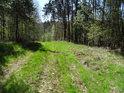 Sytě zelená lesní cesta přes Hranečník.