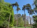 Takový klasický lesní pohled na Hranečník.