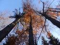 Buky na západní hranici chráněného území doplněné o smrky.
