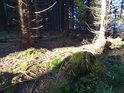 Sluneční pás ve smrkovém lese na jižní hranici Hraniční louky.