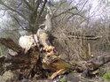 Bývalo to asi pěkná vrba, ale její dřevo už odumírá.