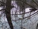 Odpadky tu plují po hladině rybníka Raška a ne zrovna ojediněle!