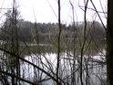 Pohled na rybník Raška přes vrbové roští.