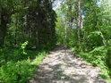 Cesta Hrobkou, to zní hrozně, ale tu jde o lesní cestu.