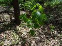 Když pronikne sluníčko do Hrobky, mají se mladé stromky k světu.