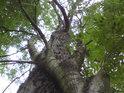 I stromy dokáží být agresivní.