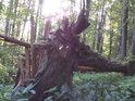 Další ze zlomených stromů.