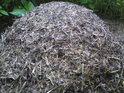 Mraveniště křídlatých mravenců.