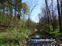 Potok Hvozdnice s malým jezem a lesní cestou po pravém břehu.