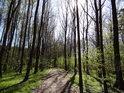 Slunce prostupuje lužním lesem zatím silně, ale s přibývajícím listím dojde k dlouhodobému zastínění.
