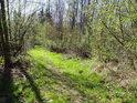 Sytost jarní lužní zeleně na pusté cestě ve Hvozdnici.