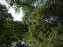 Křoví na východním břehu rybníka Jalovák.
