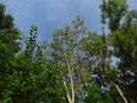 Zelenomodré velmi horké léto.