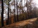 Podzimní lesní cesta plná romantických zákoutí.