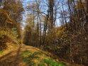 Lesní cesta podél chráněného území.