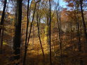 Lesní hřeben šplhá vzhůru pokryt opadajícími buky.