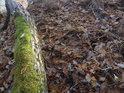 Opadané dubové listí na hranou srázu.
