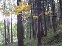 Les v severní části chráněného území.