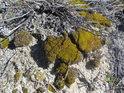 Mechy pomalu rozkládají pískovce.