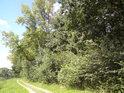 Cesta podél pravého břehu Labe oproti obci Jiřice. Vpravo chráněné území Jiřina.