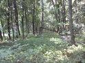 V lužním lese.