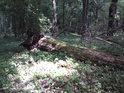 O padlé stromy se je tu přirozeně postaráno.