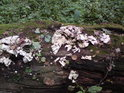Padlé stromy obsazují mechy a houby.