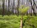 Momentálně vcelku suchá část lužního lesa.