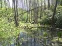 Lužní lesy znamenají především střídající se tůně s relativně suchými místy, ale celkově vždy poněkud vlhko.
