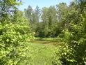 Jedna z krásných tůní v severovýchodní části přírodní rezervace Kačení louka.