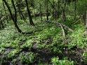 Velice mokrý habrový les se slabým potůčkem.