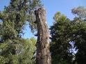 Choroše hodují nejčastěji na mrtvolách stromů.