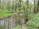 Spadlý strom tvoří dočasnou lávku přes pravobřežní živé rameno řeky Moravy.