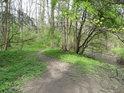 Lužní pěšina podle pravobřežního živého ramene řeky Moravy.