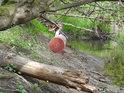 Lidé odpad odhodí, voda odpad na větvích usadí.